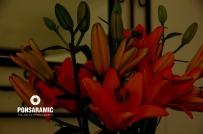birthday-flowers-watermarked