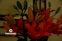 birthday-flowers-watermarked