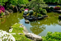 Bonsai Reflection (Watermarked)