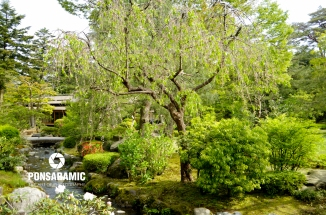 Japan - Park and River 1 (Watermarked)