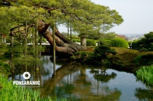 Japan - Tree and Water (Watermarked)