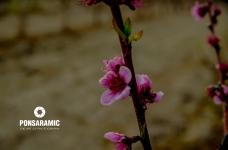 Spain Abanilla Flowers Closeup (Watermarked)